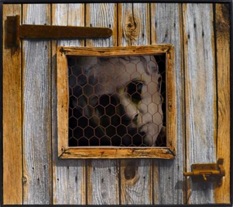 cage_2.jpg
