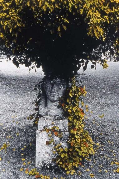 l_arbre_pierre.jpg